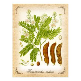 Cartão Postal Tamarind - ilustração do vintage