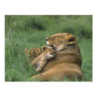 Cartão Postal Tanzânia, cratera de Ngorongoro. Mãe africana do