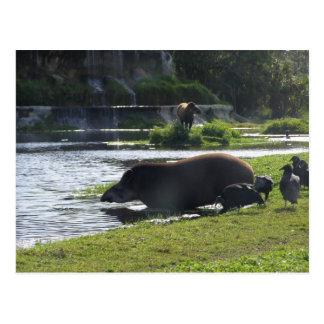 Cartão Postal Tapir que toma um mergulho no rio