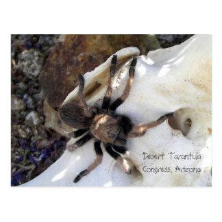 Cartão Postal Tarantula do deserto