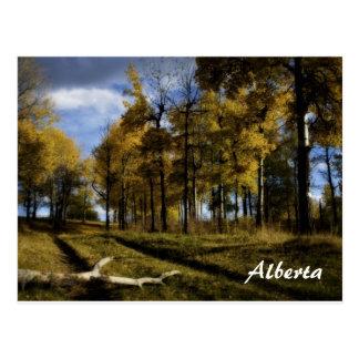 Cartão Postal tarde do outono, Alberta