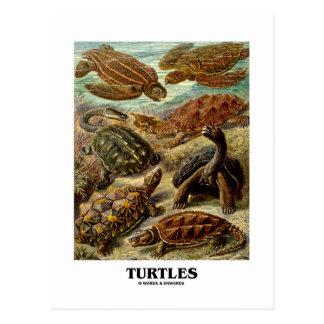 Cartão Postal Tartaruga (7 tartarugas diferentes Artforms da