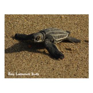 Cartão Postal Tartaruga de Leatherback do bebê