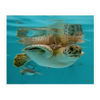 Cartão Postal Tartaruga de mar verde do bebê