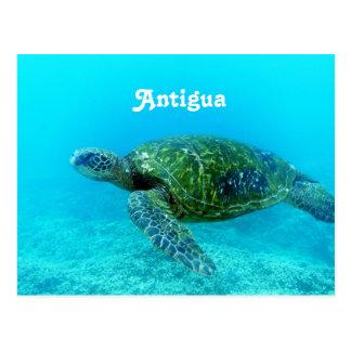 Cartão Postal Tartaruga faturada falcão de Antígua
