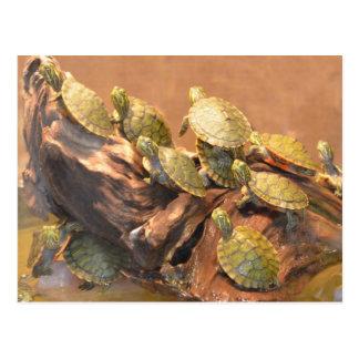 Cartão Postal Tartaruga inchada vermelho 2 de Alabama (Alabama)