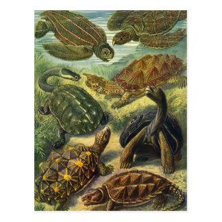 Cartão Postal Tartarugas e tartarugas de mar do vintage por