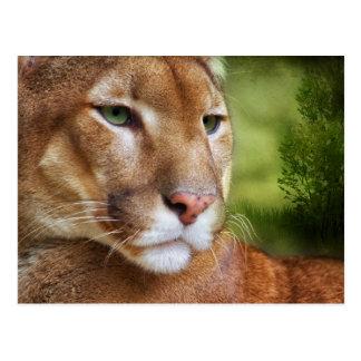 Cartão Postal TCWC - Arte do leão de montanha do puma
