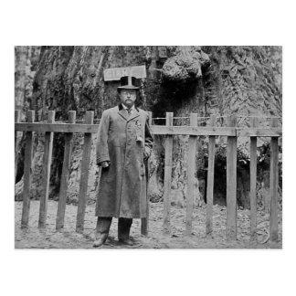 Cartão Postal Teddy Roosevelt no bosque grande Santa Cruz da