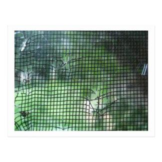 Cartão Postal Tela rasgada da janela