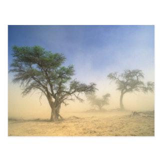 Cartão Postal Tempestade de areia no deserto de Kalahari,