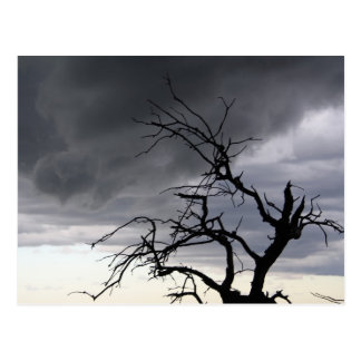 Cartão Postal Tempestade de Guadalupe