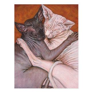 Cartão Postal Tempo da sesta dos gatos do gato da esfinge de