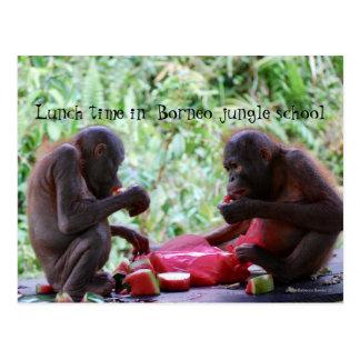 Cartão Postal Tempo do almoço na escola da selva de Bornéu para