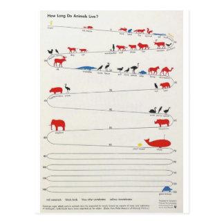 Cartão Postal Tempo dos animais