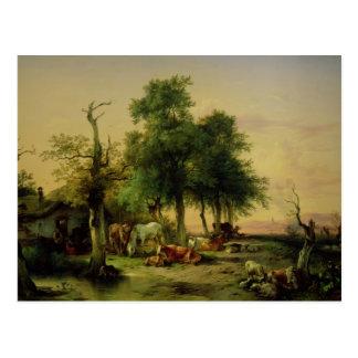 Cartão Postal Terra de pasto