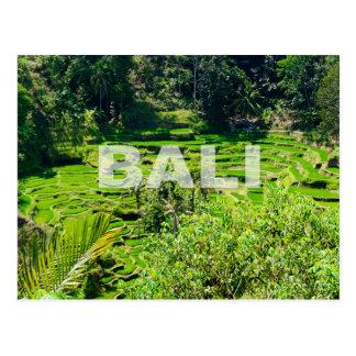 Cartão Postal Terraços do arroz de Bali