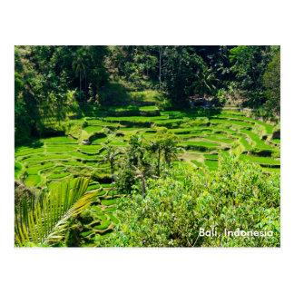 Cartão Postal Terraços do arroz de Bali, Indonésia