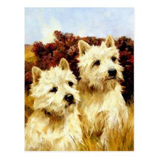 Cartão Postal Terrier brancos de montanhas ocidentais - Wardle