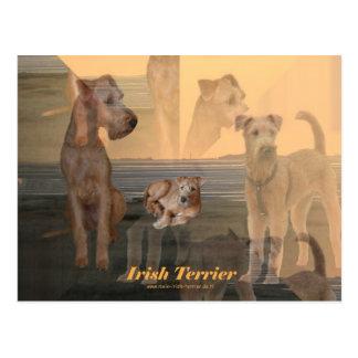 "Cartão postal ""Terrier Irlandesa """