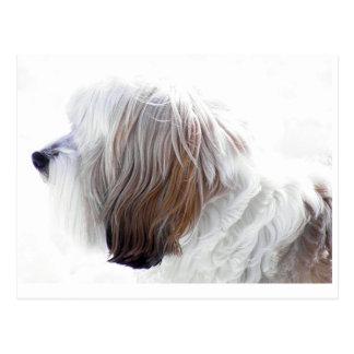 Cartão Postal Terrier tibetano