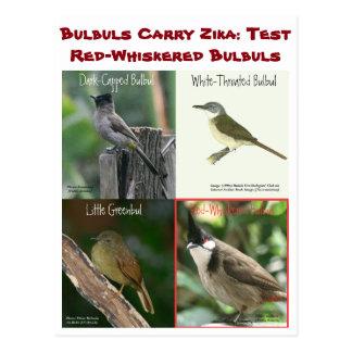 Cartão Postal Teste Bulbuls Vermelhos-Whiskered por RoseWrites