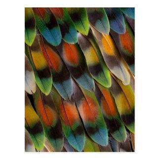 Cartão Postal Teste padrão da pena do Lovebird