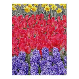 Cartão Postal Teste padrão do jacinto, das tulipas, e dos