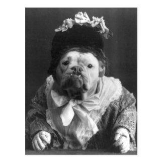 Cartão Postal Tia Maude Cão