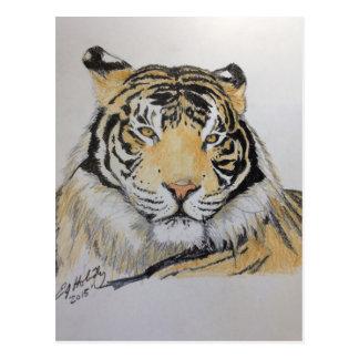 Cartão Postal Tigre