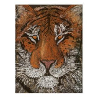 Cartão Postal tigre da noite