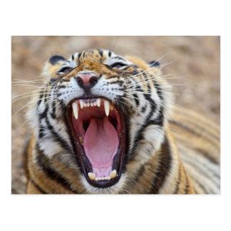 Cartão Postal Tigre de Bengal real que boceja; Ranthambhor