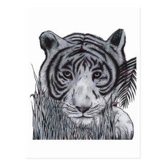 Cartão Postal Tigre na grama