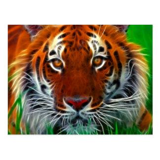 Cartão Postal Tigre raro de Sumatran de Indonésia