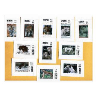 Cartão Postal Tigres de todas as 4 cores