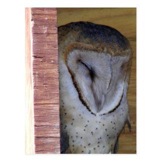 Cartão Postal Tiro principal do Fim-acima da coruja de celeiro