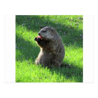 Cartão Postal Tomate Groundhog