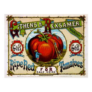 Cartão Postal Tomates vermelhos maduros para a venda aqui,