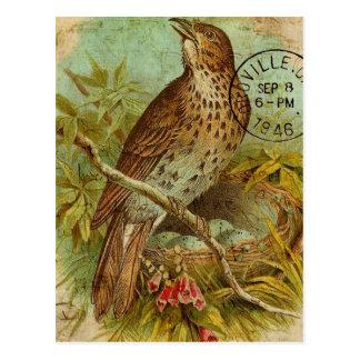 Cartão Postal Tordo do vintage