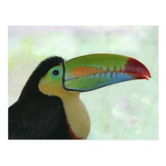 Cartão Postal Toucan