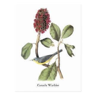 Cartão Postal Toutinegra de Audubon Canadá