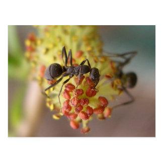 Cartão Postal Trabalho como uma abelha