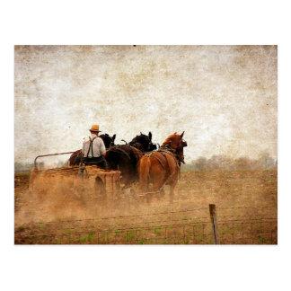 Cartão Postal Trabalho de campo psto cavalo
