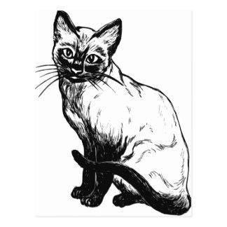 Cartão Postal Trabalhos de arte preto e branco bonitos - gato