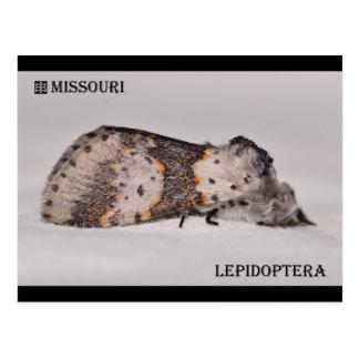 Cartão Postal Traça de Missouri
