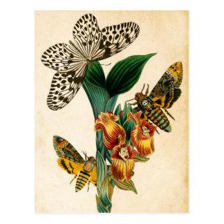 Cartão Postal Traças da borboleta & do Acherontia da ninfa da