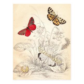 Cartão Postal Traças e borboletas