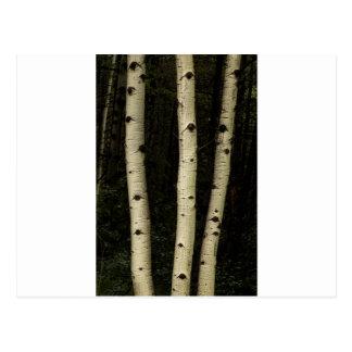 Cartão Postal Três colunas da floresta