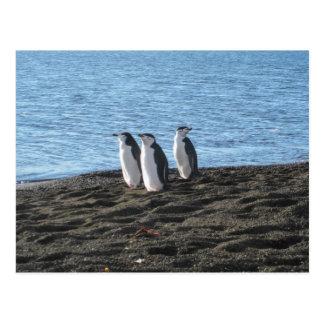Cartão Postal Três pinguins curiosos