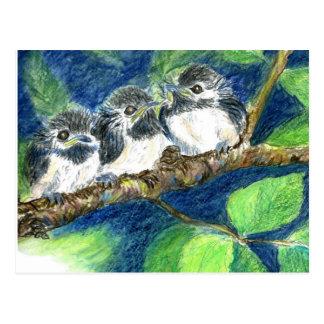 Cartão Postal Três Pintinho-um-Dees - lápis da aguarela